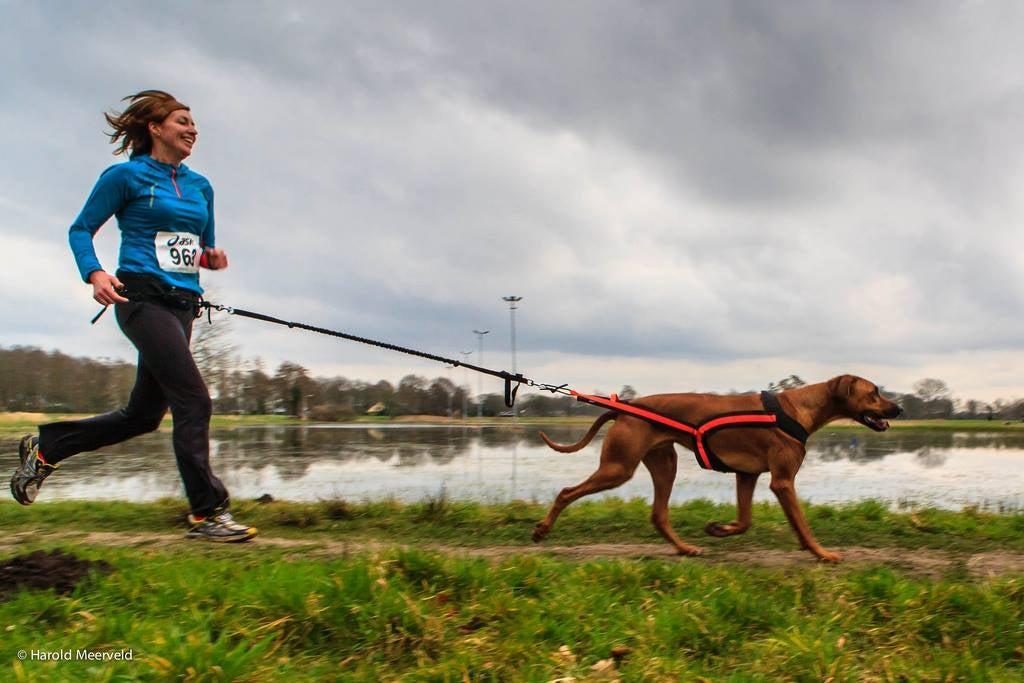 dog running harness