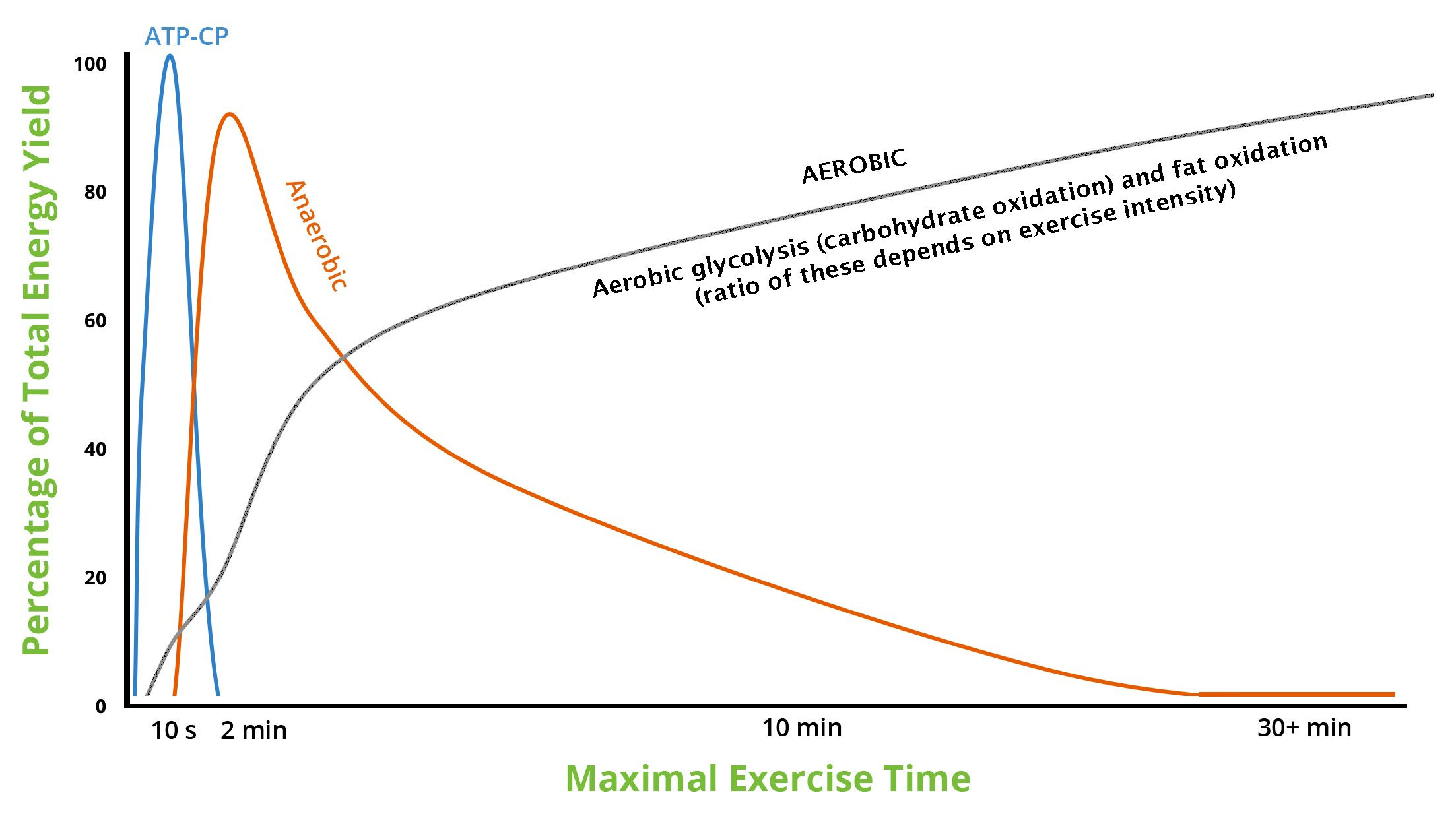 Event duration and energy source during maximal-effort exercise