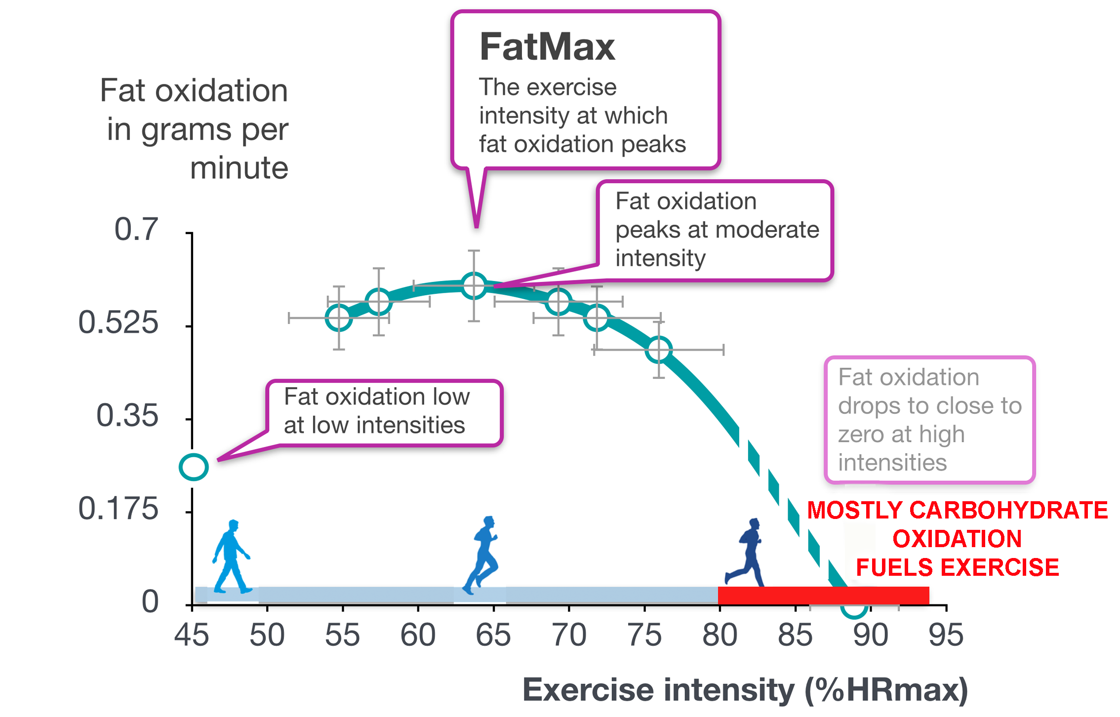 Fat vs. carbohydrate burning at different exercise intensities