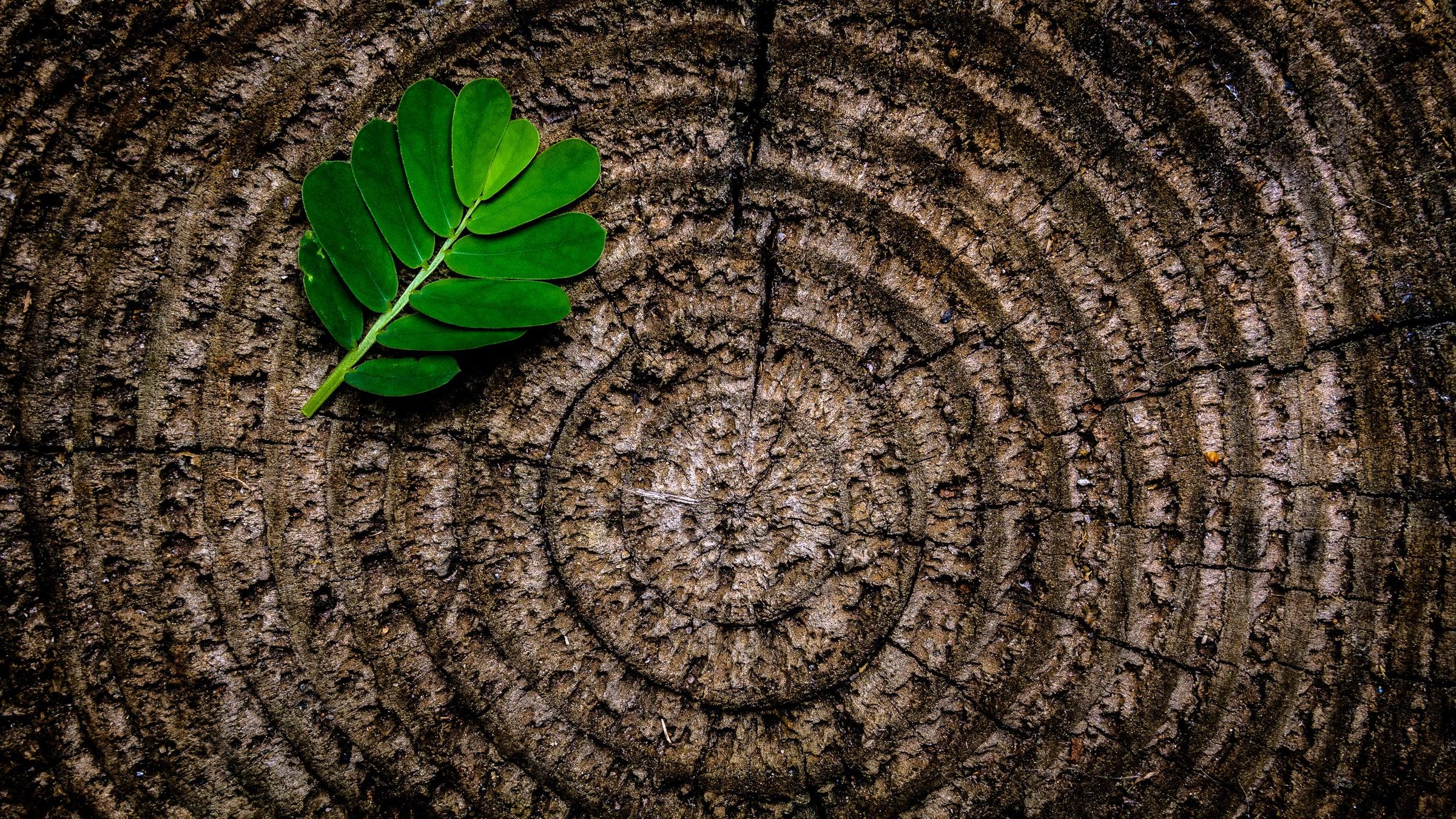 Interior of a tree stump with a fern leaf