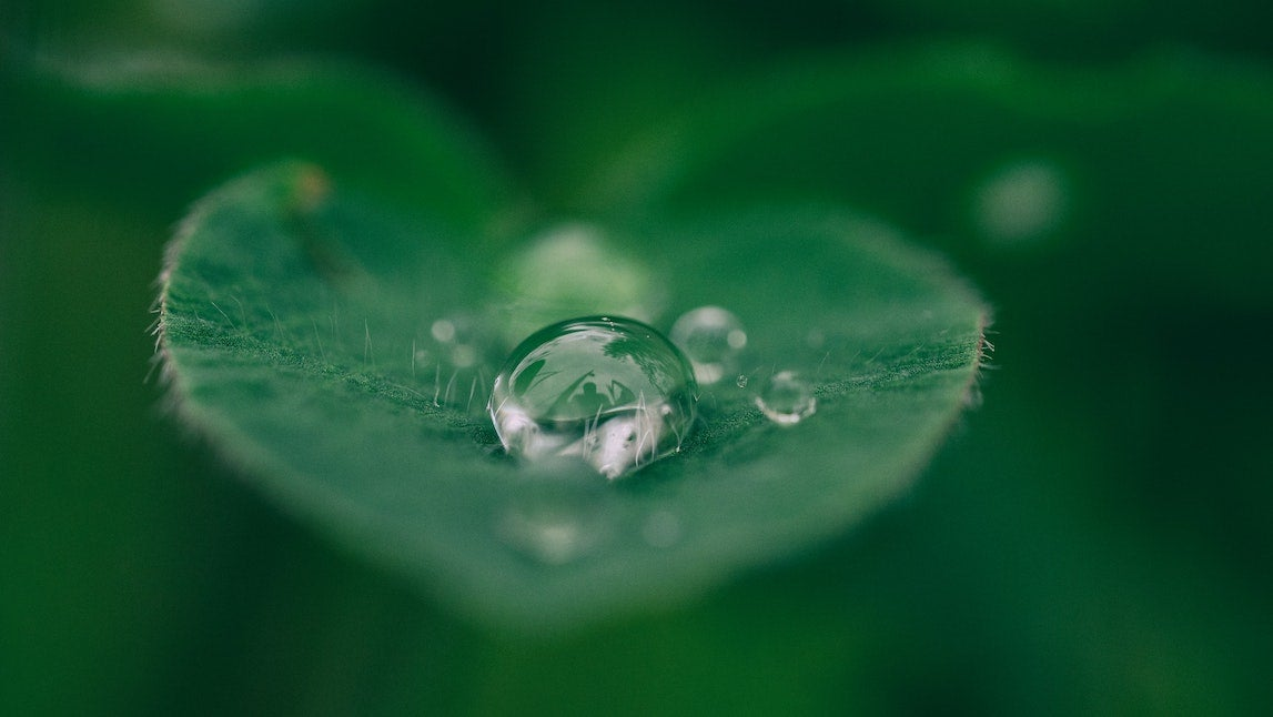 Droplet of water on leaf.