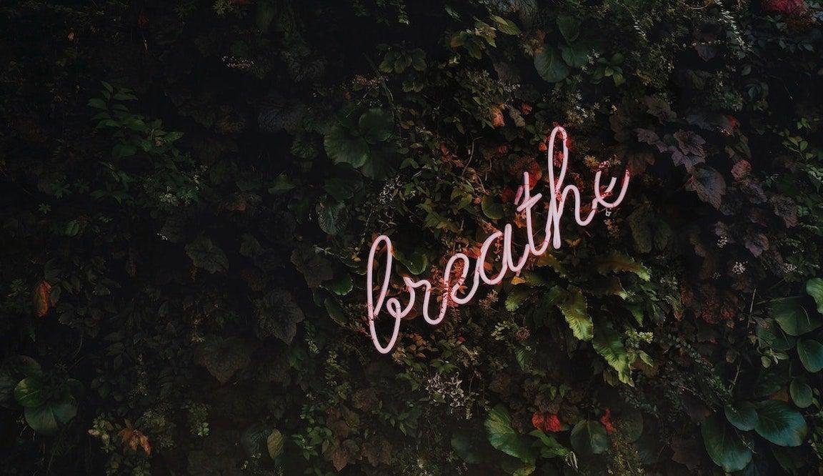 breath in pink neon wording in bushes.