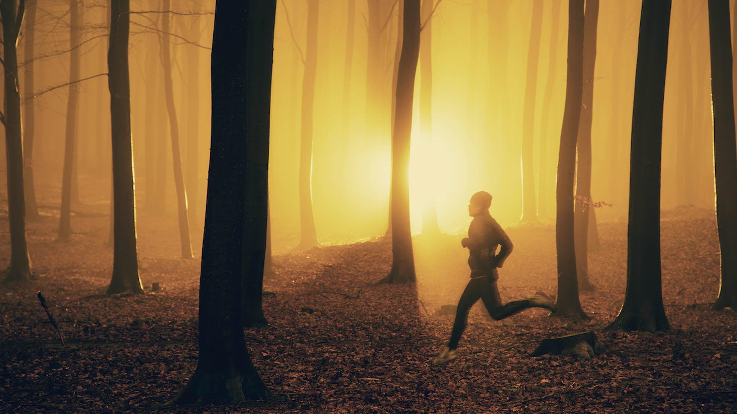 Emparejador al amanecer en el bosque brumoso